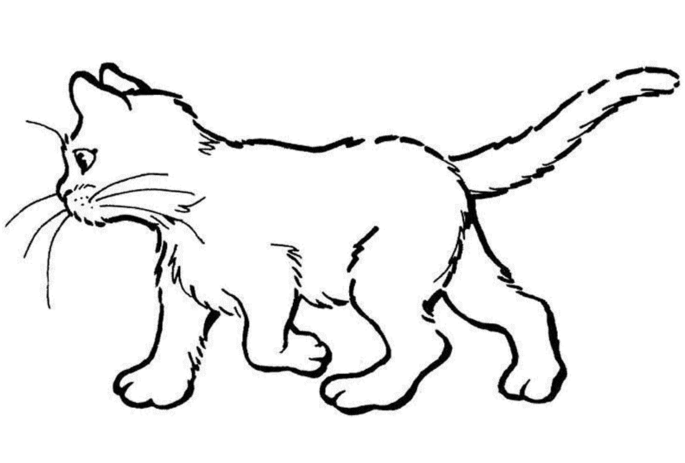 colour in cat drawing