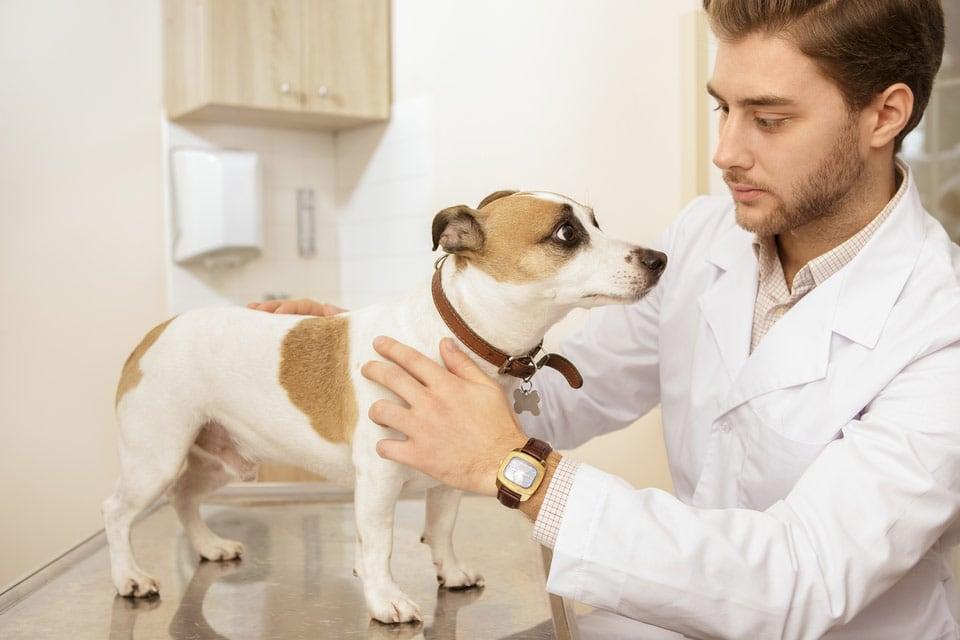 male vet treating dog